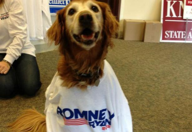 10 Patriotic Pets Who Are Ready for Election Day