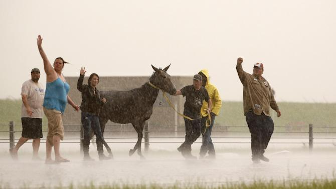 People stop traffic to help one of several loose horses across I-40 just east of 81 in El Reno, Okla., after a tornado moved through the area on Friday, May 31, 2013. (AP Photo/The Oklahoman, Jim Beckel) LOCAL STATIONS OUT (KFOR, KOCO, KWTV, KOKH, KAUT OUT); LOCAL WEBSITES OUT; LOCAL PRINT OUT (EDMOND SUN OUT, OKLAHOMA GAZETTE OUT) TABLOIDS OUT