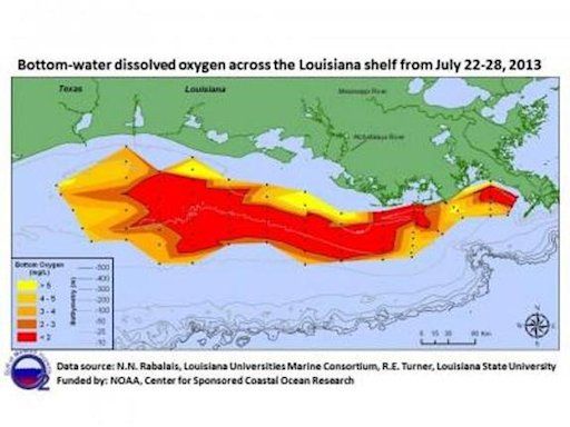 Smaller-Than-Expected Gulf Dead Zone Is Still Massive