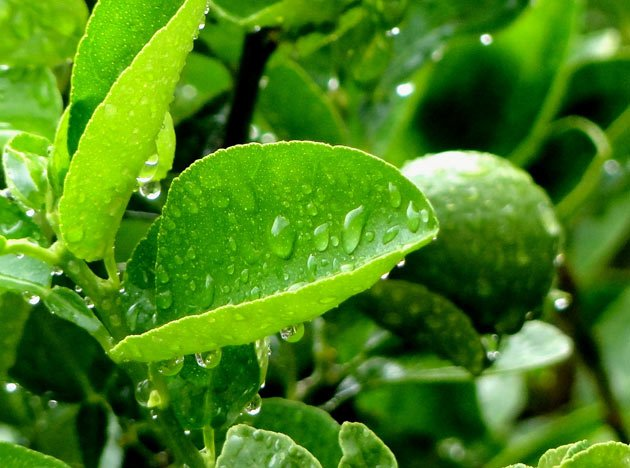 monsoon-pictures-25