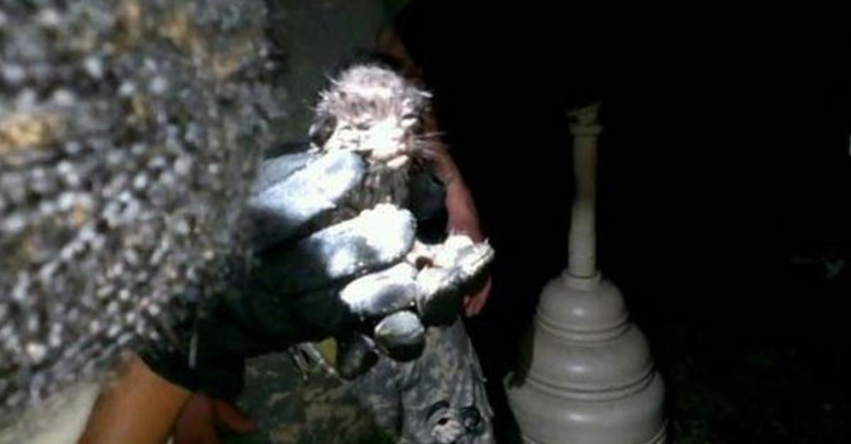 Soldiers Rescued Some Kittens in Most Amazing Way