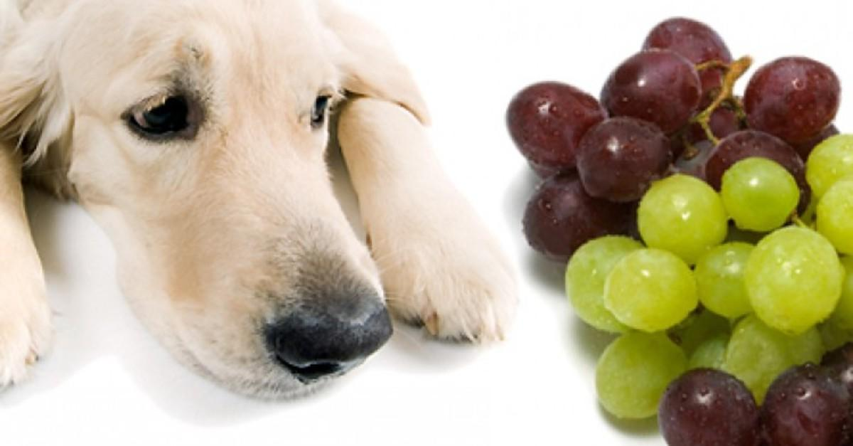 15 Foods You May Not Know Could Kill Your Dog