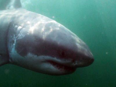 Expert: Great White Shark Is 'Blowing Our Minds'