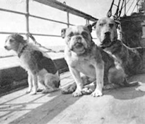 Remembering the Dogs of the Titanic