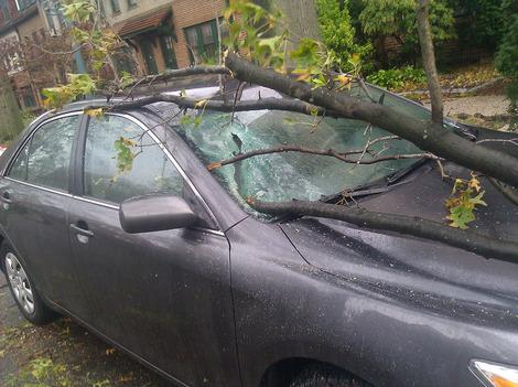 Photos: Tree Branch Impales Car in Queens