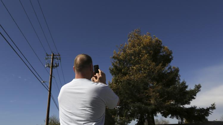 A man snaps a photograph of rare albino redwood tree in Cotati