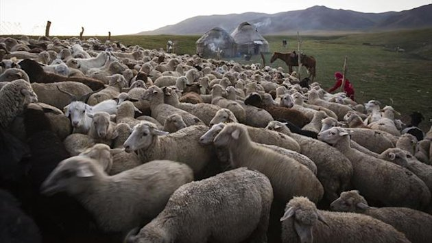 Sheep and goats in Kazakhstan (Reuters)