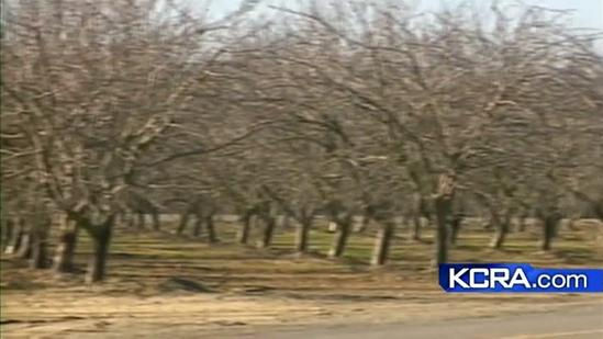 Cold weather affects food prices in Stanislaus County