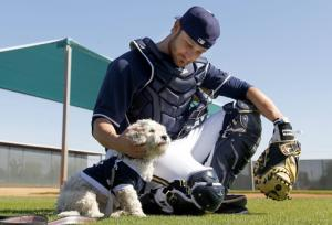 Stray dog Hank becomes big hit in Brewers' camp