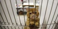 Hundreds of cats rescued from pet hell hotel