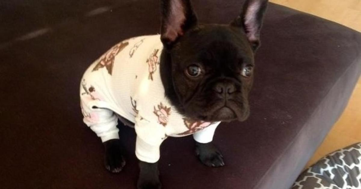 15 Dogs in Pajamas That Are Too Cute For Words