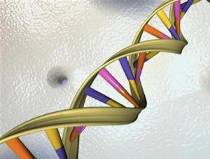 A DNA double helix in an undated artist's illustration released by the National Human Genome Research Institute to Reuters