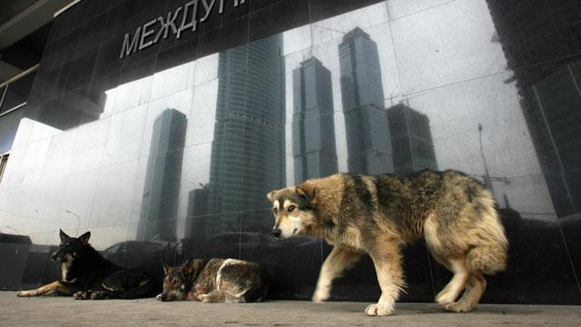 Moscow's Stray Dogs Hunted Tonight