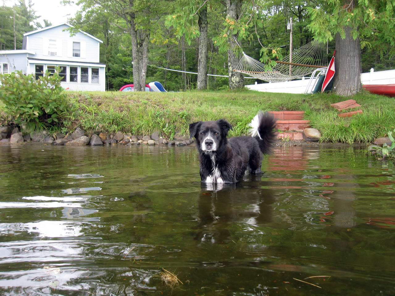 Did your dog get skunked? There's an easy household remedy