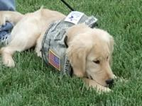 Warrior Canines on the Homefront