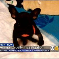 Man Arrested For Strangling Puppy