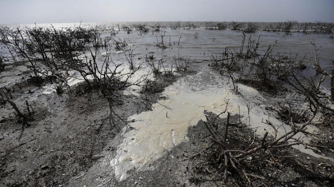 Sea foam is seen amongst dead mangrove, formerly dense, green and a nesting sight for brown pelicans, egrets and roaseate spoon bill, which was directly impacted by oil from the nation's worst offshore oil spill, is seen as it erodes into Barataria Bay at Cat Island in Plaquemines Parish, La., Thursday, April 18, 2013. Underneath the surface, environmentalists and scientists fear there may be trouble, from tiny organisms to dolphins. Yet the long-term environmental impact from the spill is still not fully known and will likely be debated for years to come. (AP Photo/Gerald Herbert)