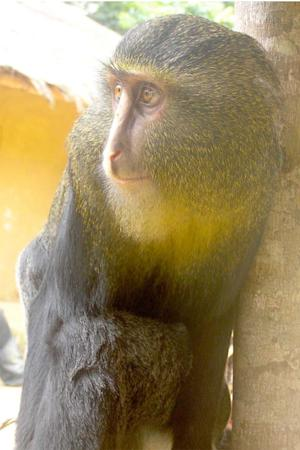 New, Colorful Monkey Species Discovered
