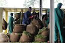 Workers receive sacks of tea leaves at the Kagwe tea factory in Githunguri