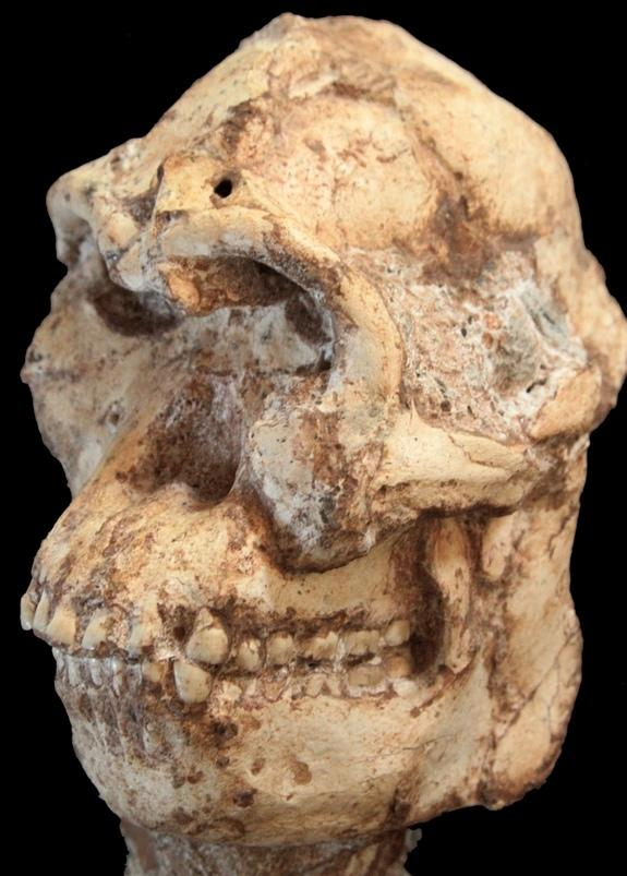Famed Human Ancestor Lucy Wasn't Alone: Meet 'Little Foot'