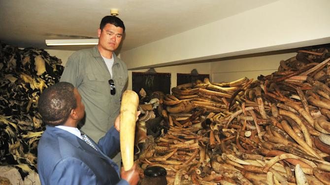 Yao Ming, China's top basketball star, Thursday, Aug. 16, 2012, Nairobi, Kenya, with the Director of Kenya Wildlife Services, Julius Kipn'getich, left, watching the elephant tusks at the Kenya Wildlife Services strong room. Ming is visiting Kenya on his first-ever visit to Africa to film a documentary aimed at reducing poaching attacks against elephants and rhinos. The two animals are coming under increasing attacks by poachers who sell rhino horns and elephant tusks to buyers in Asia who acquire the animal products as a sign of affluence. Ming has spent nearly a week in Kenya, visiting wildlife parks where he has seen elephant carcasses killed by poachers. (AP Photo/Sayyid Azim)