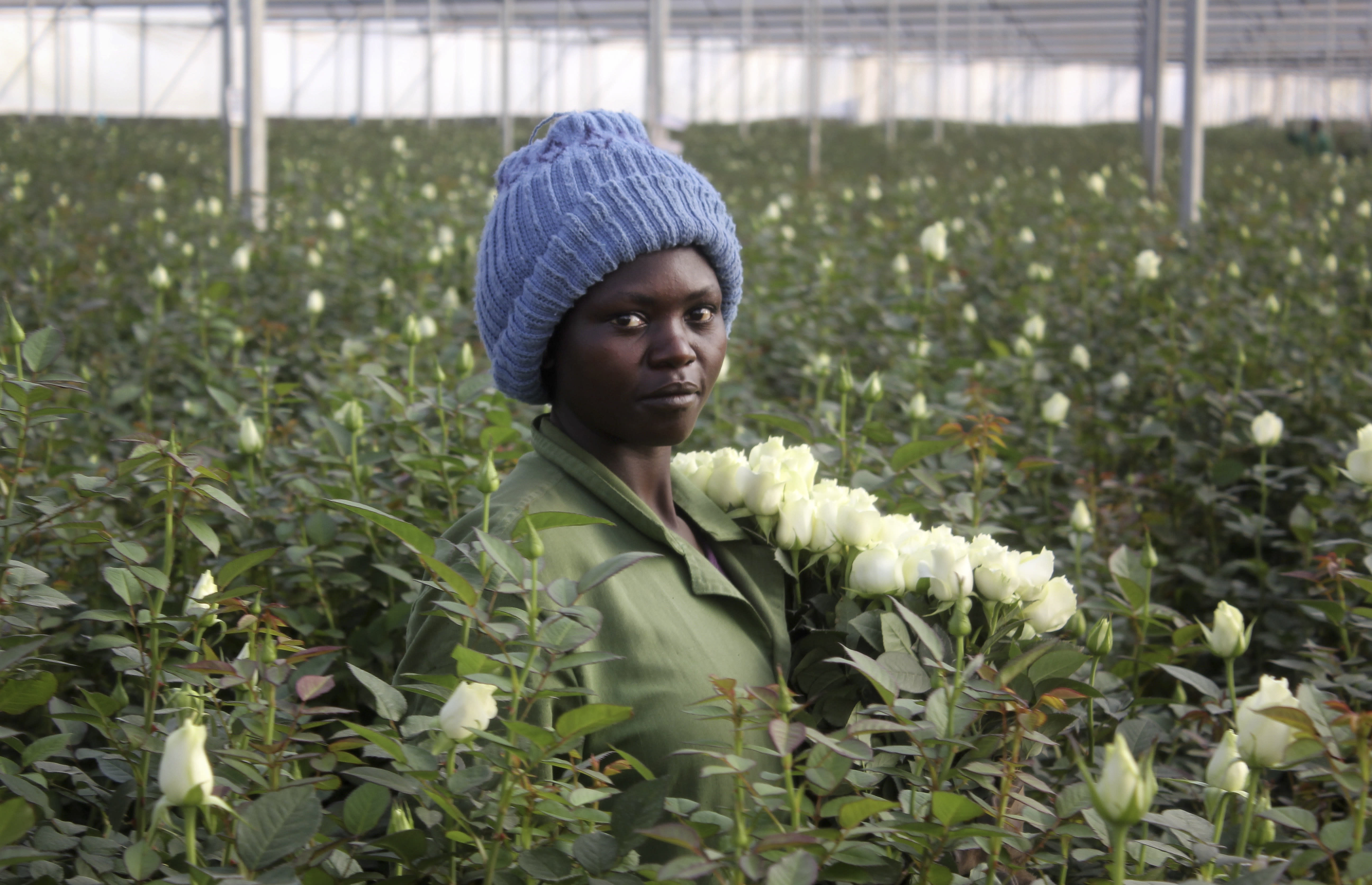 Those Valentine's Day flowers might just be from Kenya