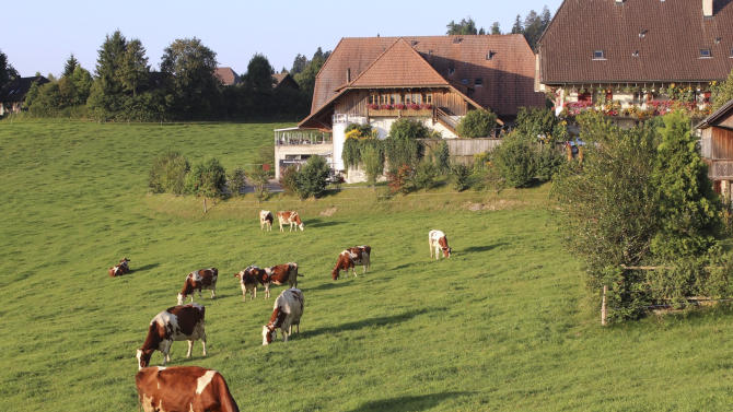 """In this photo taken Tuesday, Aug. 23, 2011, dairy cows graze on grass in the Emmental region of Switzerland. The Emmental Show Dairy cranked out 1.2 million pounds (550 metric tons) of cheese three years ago, but now makes a third less and might be forced to cut back to a few wheels a day _ just to show tourists. The strength of the Swiss franc is driving down profits in this Alpine nation, poking holes in the finances of making Emmental, popularly known as """"Swiss cheese"""" in North America.  (AP Photo/Mark D. Carlson)"""