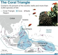 The so-called Coral Triangle covers Indonesia, the Philippines and Papua New Guinea. More than 85 percent of coral reefs are directly threatened by human activities, according to a recent study