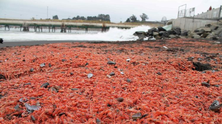 Utility denies fault in massive Chile shrimp death