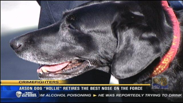Arson dog Hollie retires the best nose on the force
