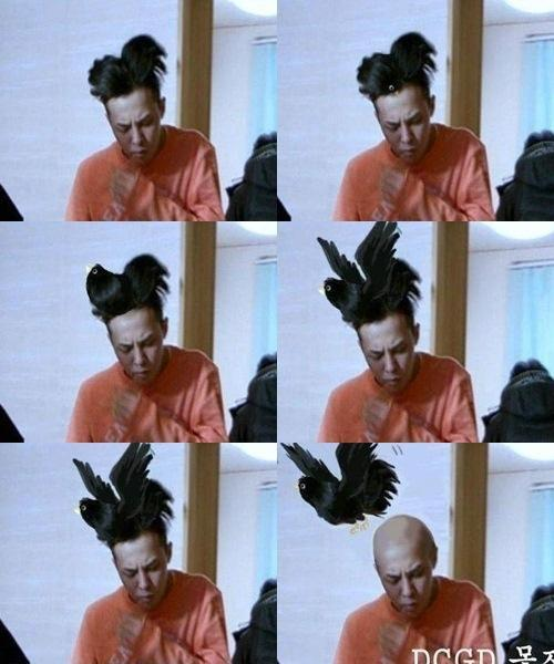 G-Dragon′s Hair Made Into a Magpie Bird