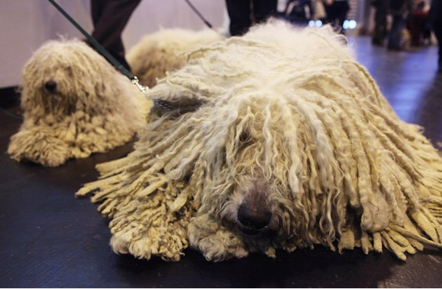 Dogs And Owners Gather For…