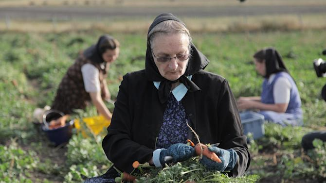"""This undated image released by National Geographic Channels shows Hutterite Judy Hofer picking carrots from the garden in King Colony, Mont.  """"Meet the Hutterites,"""" a National Geographic documentary series about a small religious colony in rural Montana. Leaders of a Hutterite colony are demanding to meet with the head of the National Geographic Society after they say a reality show on the National Geographic Channel misrepresented life on the Montana colony and harmed their members. The King Ranch Colony says residents were pressured and coerced to fabricate scenes to boost ratings, and they are want a public apology and a pledge that the 10 episodes never air again. (AP Photo/National Georgraphic, Ben Shank)"""
