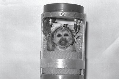 The second monkey in space looked profoundly uncomfortable