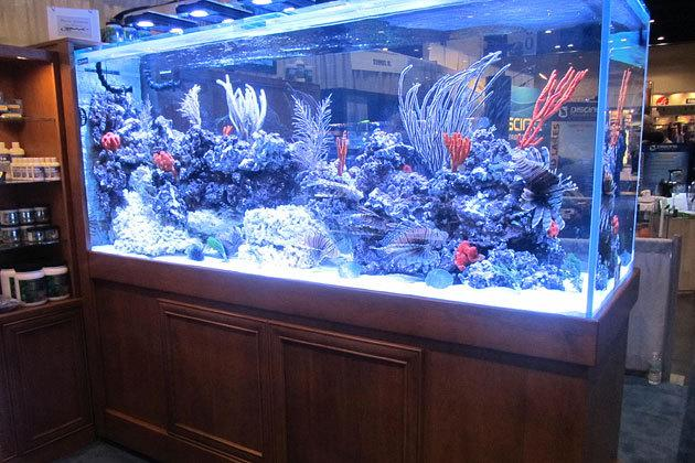 Boyd Enterprises Reef Aquaria Design, $60,000