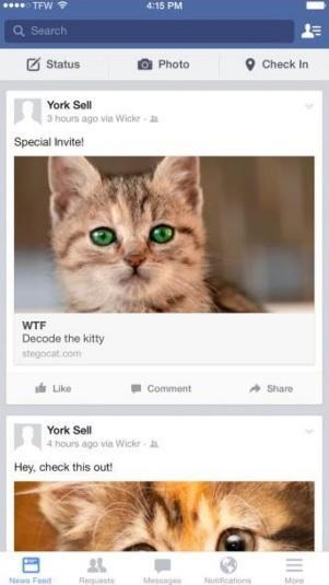 Hide photos on Facebook with Wickr's cat decoys
