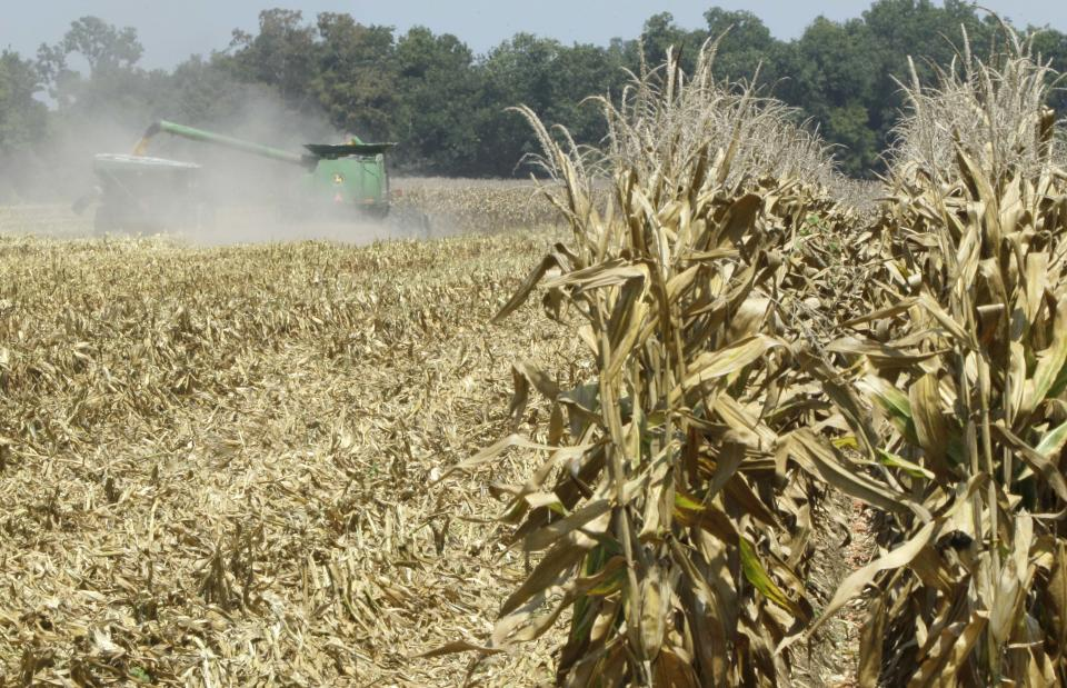 FILE - In this Aug. 15, 2012 file photo, corn is harvested in a parched field near Coy, Ark. The remnants of Tropical Storm Isaac could ease but not eliminate drought conditions in Arkansas, Missouri and Illinois by dropping 2 to 5 inches of rain. (AP Photo/Danny Johnston, File)