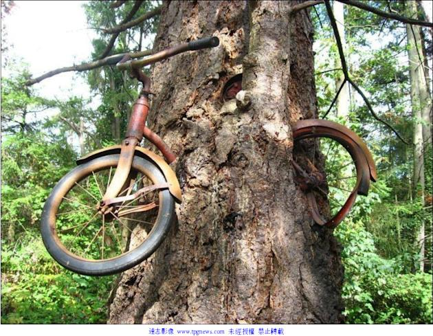 飢餓樹吃單車 Yahoo奇摩新聞