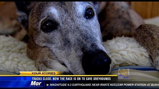 Tracks close, now the race is on to save greyhounds