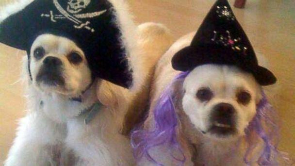 These Pets in Halloween Costumes Will Get You in the Spooky Spirit
