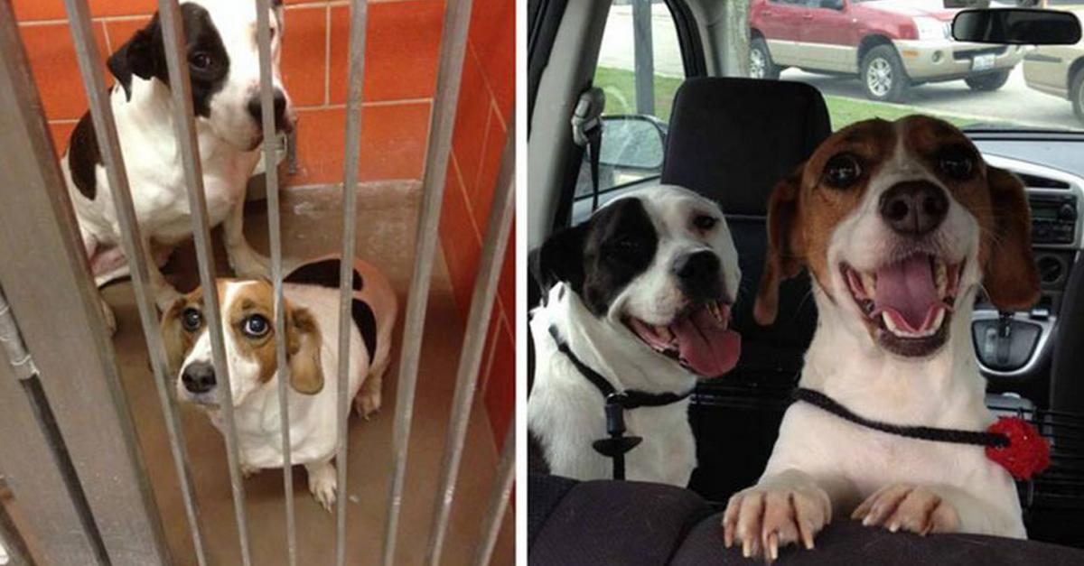 13 Dogs That Show How Awesome Adoption Can Be
