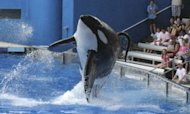 PETA Sues SeaWorld Under US Slavery Law