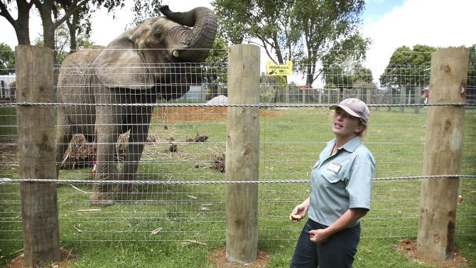 In this photo taken on Dec. 20, 2009, Franklin Zoo and Wildlife Sanctuary vet Dr. Helen Schofield stands near Jumbo, a former circus elephant, at Franklin Zoo in Auckland, New Zealand. The elephant killed Schofield who cared her at the zoo on Wednesday, April 25, 2012. (AP Photo/NZ Herald, Greg Bowker) NEW ZEALAND OUT, AUSTRALIA OUT
