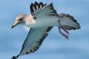 Seabirds Smell Their Way Home