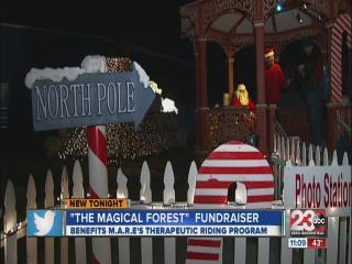 The Magical Forest Fundraiser