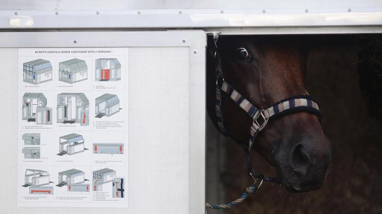 A horse stands in a flight container at Fraport airport