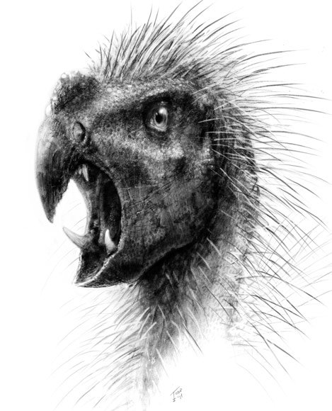 Pegomastax africanus - The &amp;#39;Dracula&amp;#39; Dinosaur