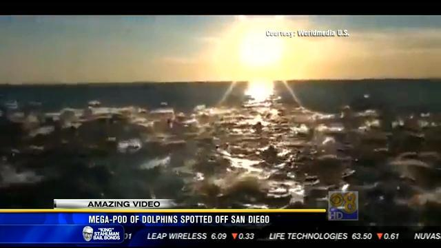 Mega-pod of dolphins spotted off San Diego