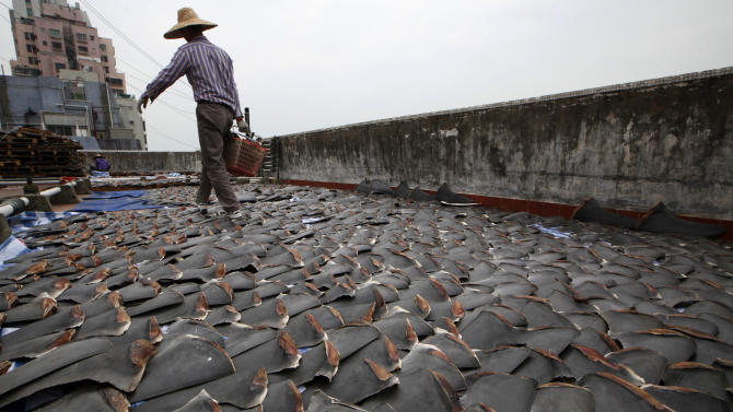 HK traders use roof to dry thousands of shark fins