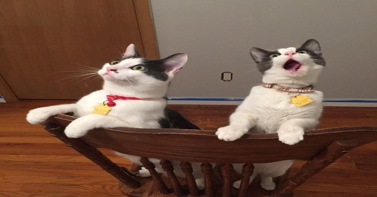 Cats See Ceiling Fan Move For First Time (PHOTO)